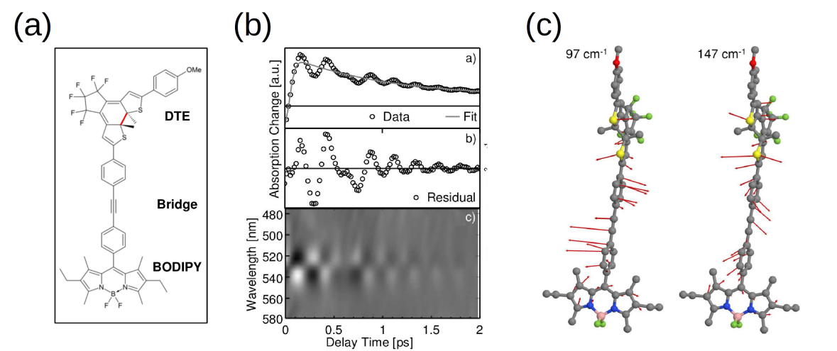 (a) Molecular structure of the investigated DTE-BODIPY dyad (b) 1D cut and 2D representation of the fs UV/Vis pump-probe experiment indicating a coherent signal, (c) calculated vibrational frequencies corresponding to the experimental observations.